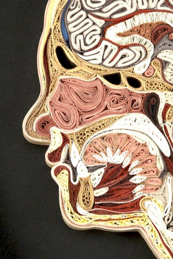 Cross-Sections of the Human Body by Lisa Nilsson