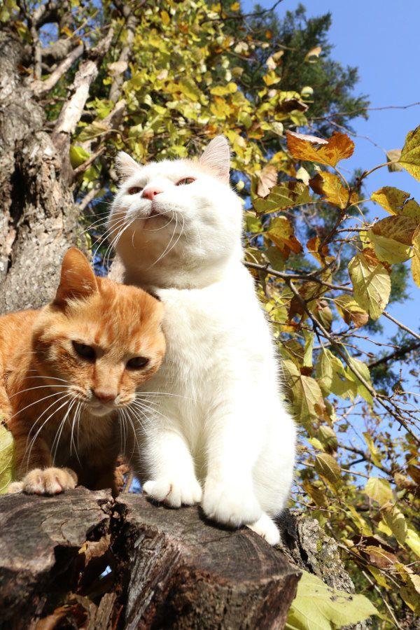 桑の木 - かご猫 Blog