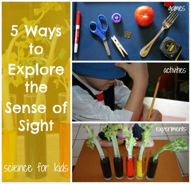 5 Ways to Explore the Sense of Sight including a science experiment and a memory game.