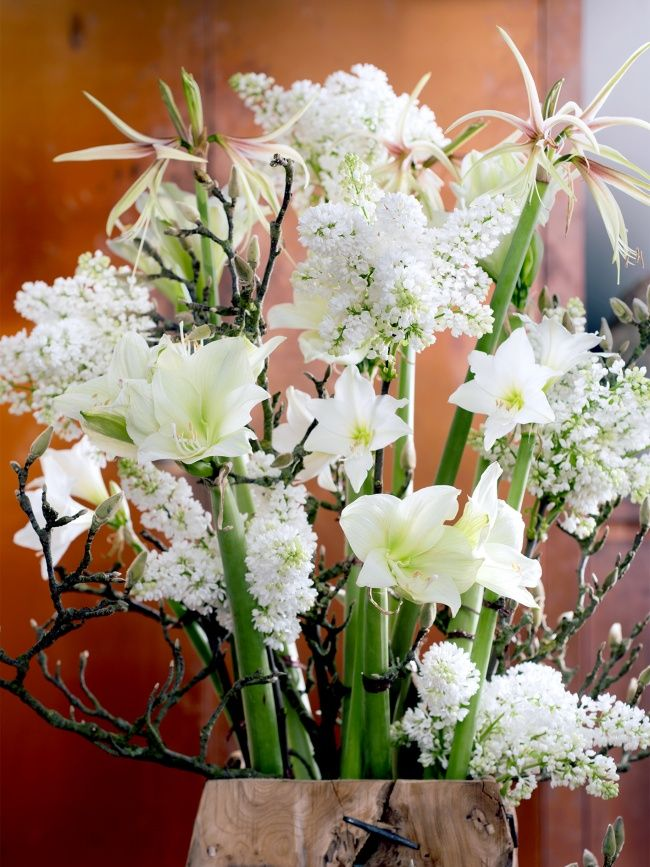 A bouquet of white Amaryllis