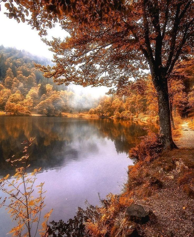 Fall Autumn In 2020 Landscape Photography Nature Photography