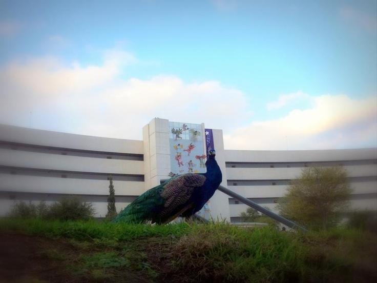 2012 11. Al fondo CIAP. ITESM. Monterrey.