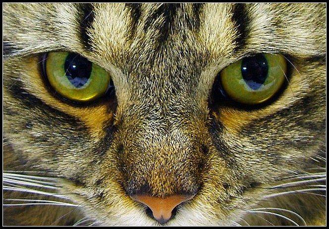 Google Image Result for http://2.bp.blogspot.com/-ExtAnDa4Cjc/TsPfq1MEhmI/AAAAAAAAA4I/uMcdyyXiqlg/s1600/Woah-cat-eyes.jpg
