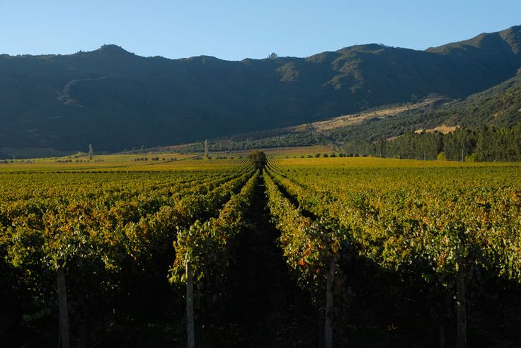 Viña Santa Rita Chile - Valle Apalta