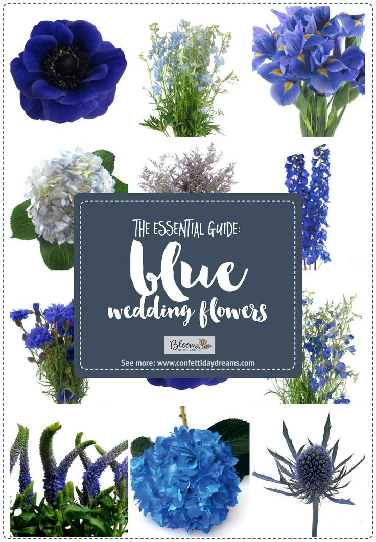 The Essential Blue Wedding Flowers Guide Types of Blue