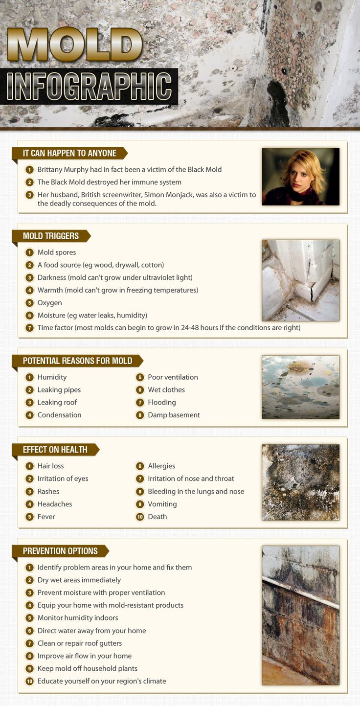 How to identify black mold - Mold Infographic