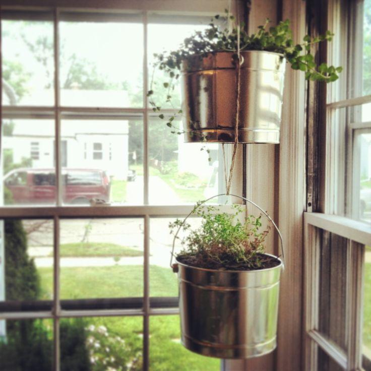 Kitchen Herb Gardens That Will Make Cooking Wonderful: 7 Best Indoor Gardening Images On Pinterest