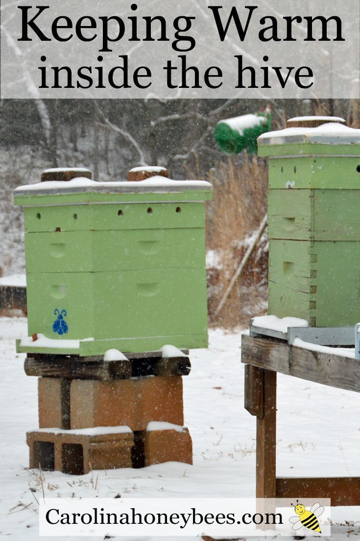 What do honey bees do during winter? Honeybees do not hibernate they generate heat. Carolina Honeybees Farm