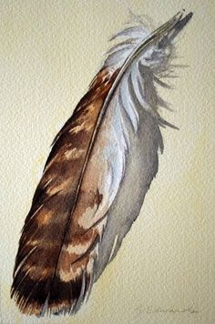 red tail hawk feather drawing - Google Search