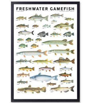 66 best freshwater fishing illustrations images on for Freshwater fishing ny