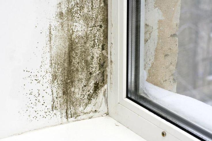 M s de 1000 ideas sobre quitar manchas de moho en - Como quitar moho de la pared ...