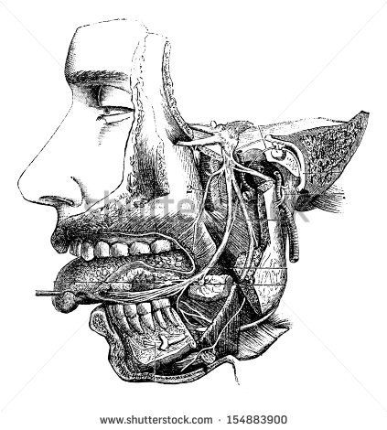 Inferior maxillary nerve and its branches, vintage engraved illustration. Usual Medicine Dictionary - Paul Labarthe - 1885. - stock vector