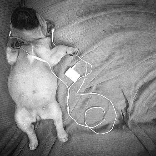 pug + music!