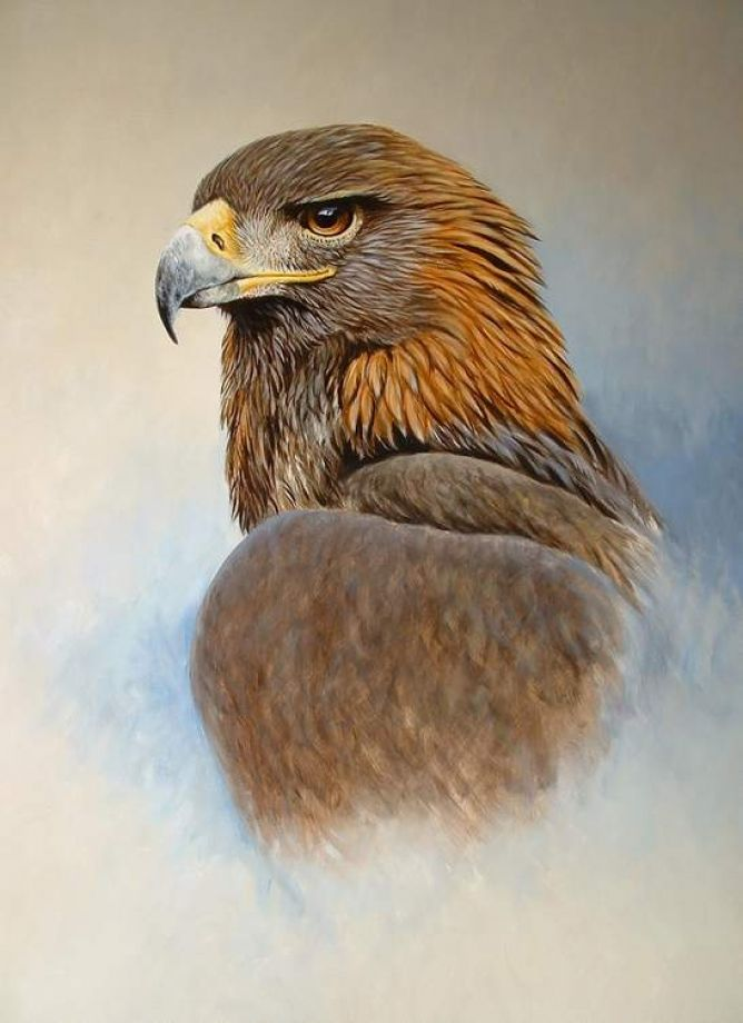 1000+ ideas about Golden Eagle on Pinterest | Eagle bird, Eagles ...