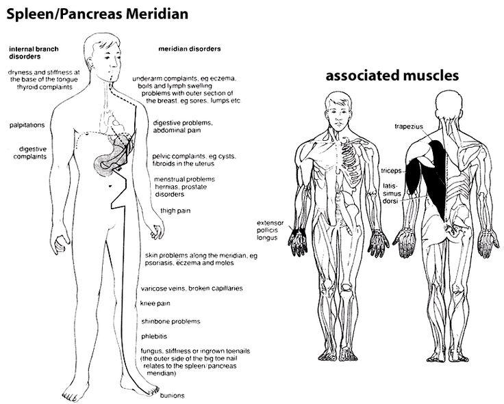 best 20+ spleen pain ideas on pinterest | severe ibs, ems and emt, Skeleton