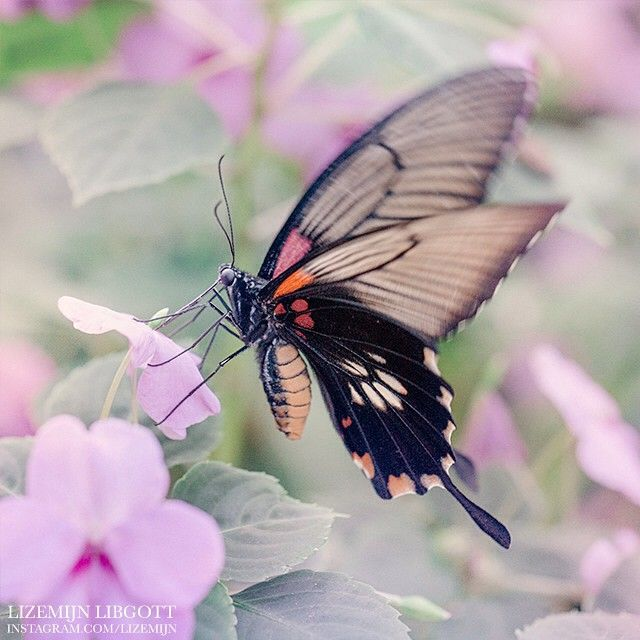 Butterfly fluttering through a lilac dream Purple | Dreamy  Copyright Lizemijn Libgott  https://instagram.com/lizemijn
