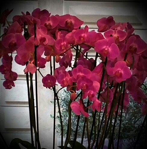 Orquídeas de invierno.