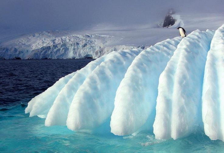 Adelie on Iceberg Photo by Juan Kratzmaier — National Geographic Your Shot