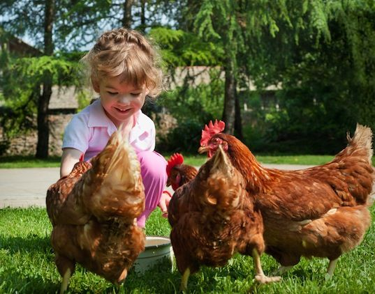 Interacting with animals can help autistic children http://bit.ly/XXFCmg