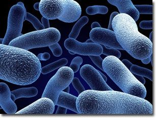 How to Prepare a Beneficial Microorganism Mixture