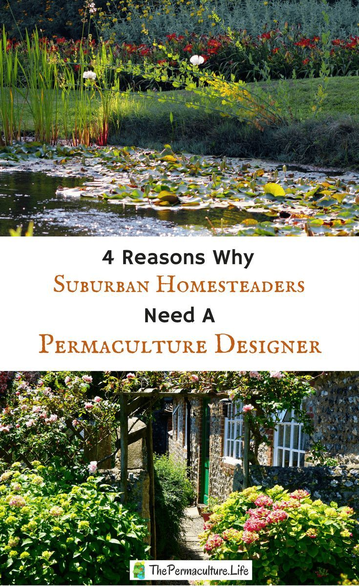 Permaculture design can make our lives better, more self-sufficient, and more productive. The best way to do this is by hiring a permaculture designer.