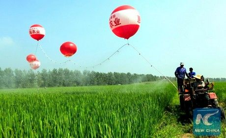 Growers in Anhui province, Eastern China, have found an efficient and innovative…