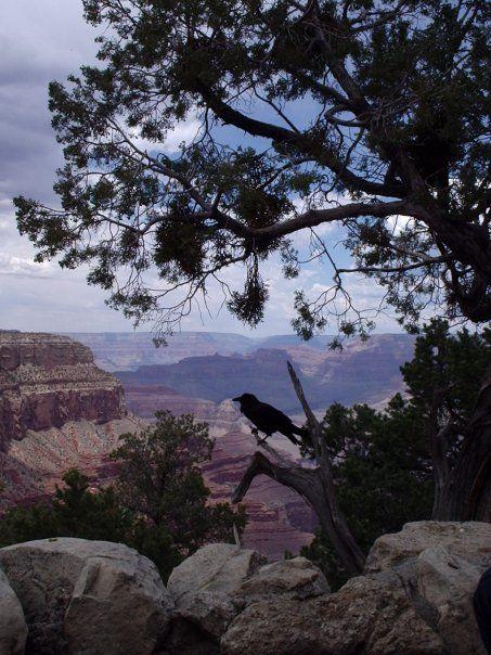 a bird! Gran Canyon, Colorado