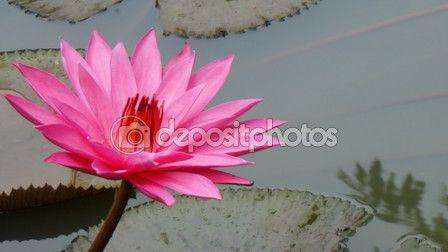 Close up beauty flower — Stock Photo © photostocknatonny #124627382