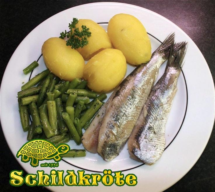die 39 besten bilder zu berlin restaurant schildkröte ... - Regionale Küche Berlin