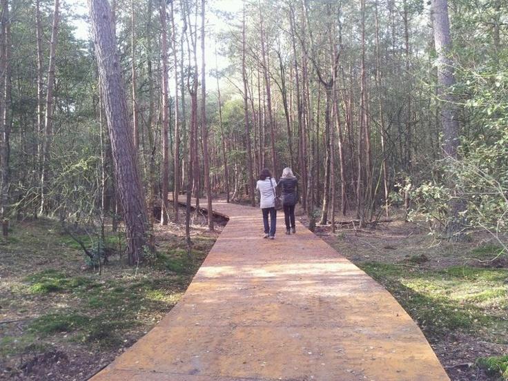 Nieuwe natuurbegraafplaats den en rust in bilthoven l a for Buro savannah