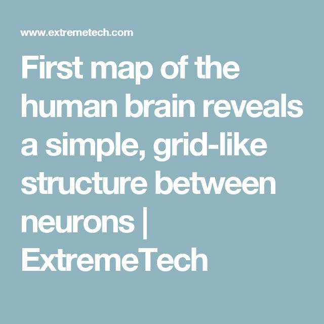 First map of the human brain reveals a simple, grid-like structure between neurons | ExtremeTech