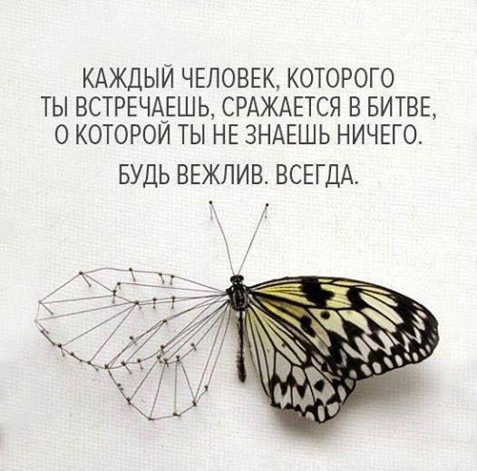 13892013_1098893280165675_3179195739521139129_n.jpg (526×519)