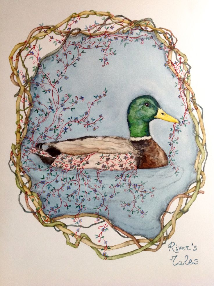#mallard #illustration #watercolor #pencildraw #bird #river #duck