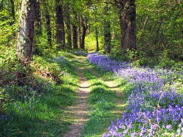 c26310856f4ee4ae49d9893b42b9c60f - Best Gardens To Visit In Spring