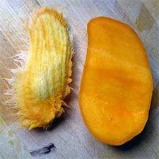 Faire germer une amande de mangue pour voir pousser un petit manguier / planté 16-05-2013