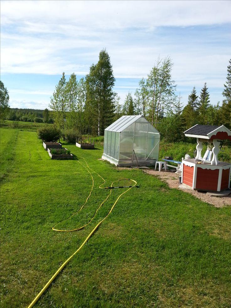 Siinä on minun kasvihuone jossa on tomaatteja, paprikoita, pensas papua ja kasvihuone kurkkua. Takana kasvilavoissa kasvaa porkkanaa, sipulia, retiisiä, erinlaisia salaatteja, hernettä, tilliä, persiljaa sekä kesäkurpitsaa. Etualalla on koristekaivo.