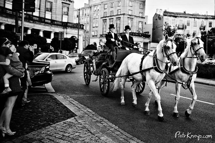 bryczka zaprzęgnięta w białe konie