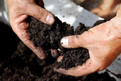 Black soil garden pinterest for Black garden soil