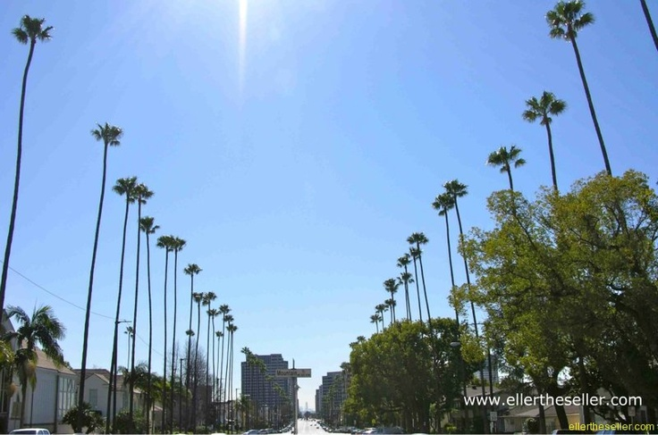 love the palm trees in cali!: Sunny Day