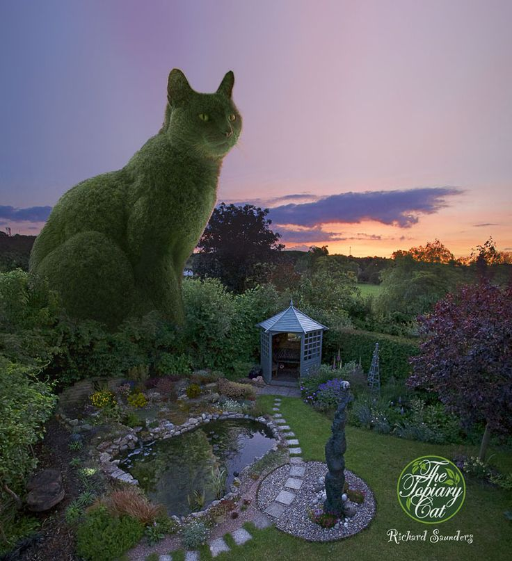 The Topiary Cat evening. This is The Topiary Cat visiting his Master's garden in the countryside of Hertfordshire, England. In this form he is much too large to live there permanently. However, Tolly, the Russian Blue he is based upon, does live there. Tolly is most definitely the Master of that house though!