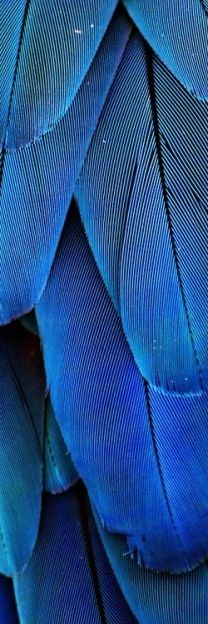 blue feathers. love the color