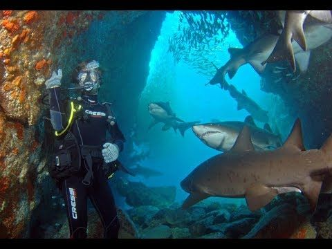 Best Places To Swimming With Sharks