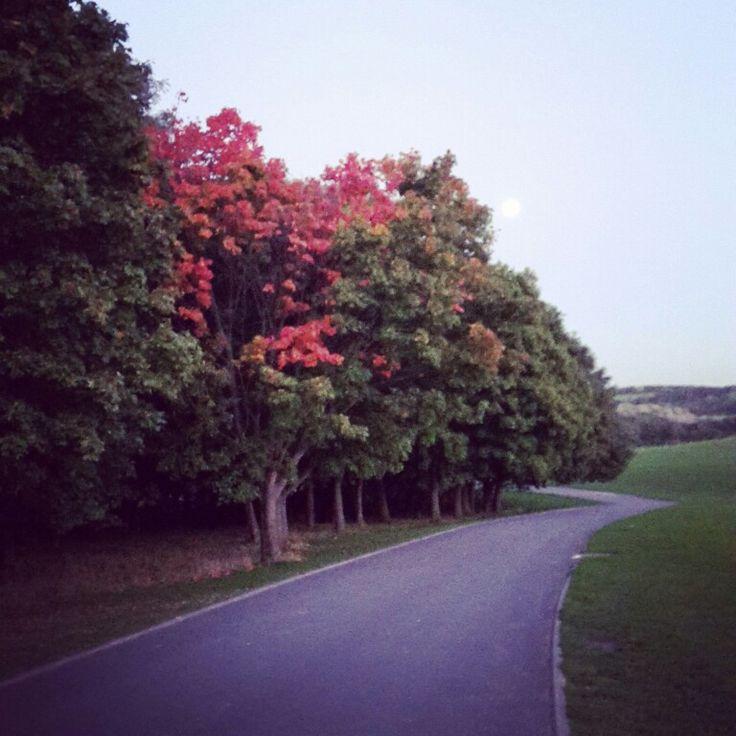 My favourite season  #lastnight #autumn #leaves #countryside #Yorkshire #landscape #sky #photography