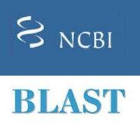 What is BLAST Software - BioinforMaticianNRJ