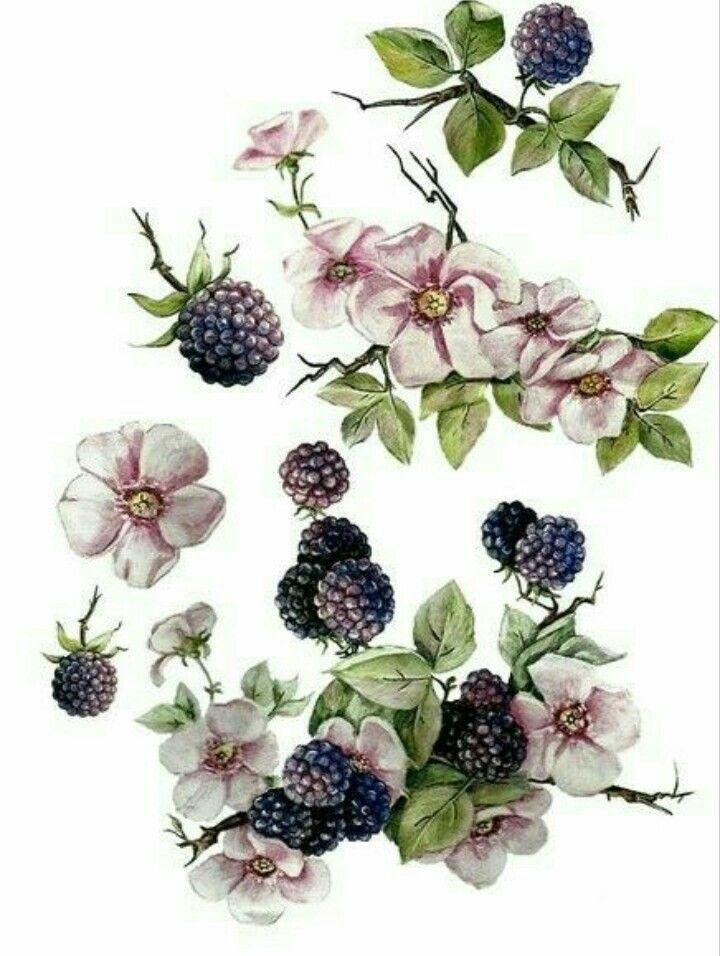 Цветы ягоды картинки для декупажа