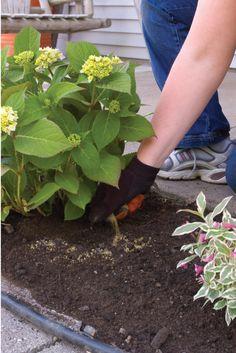 Best 25 hydrangea landscaping ideas on pinterest for Less maintenance plants