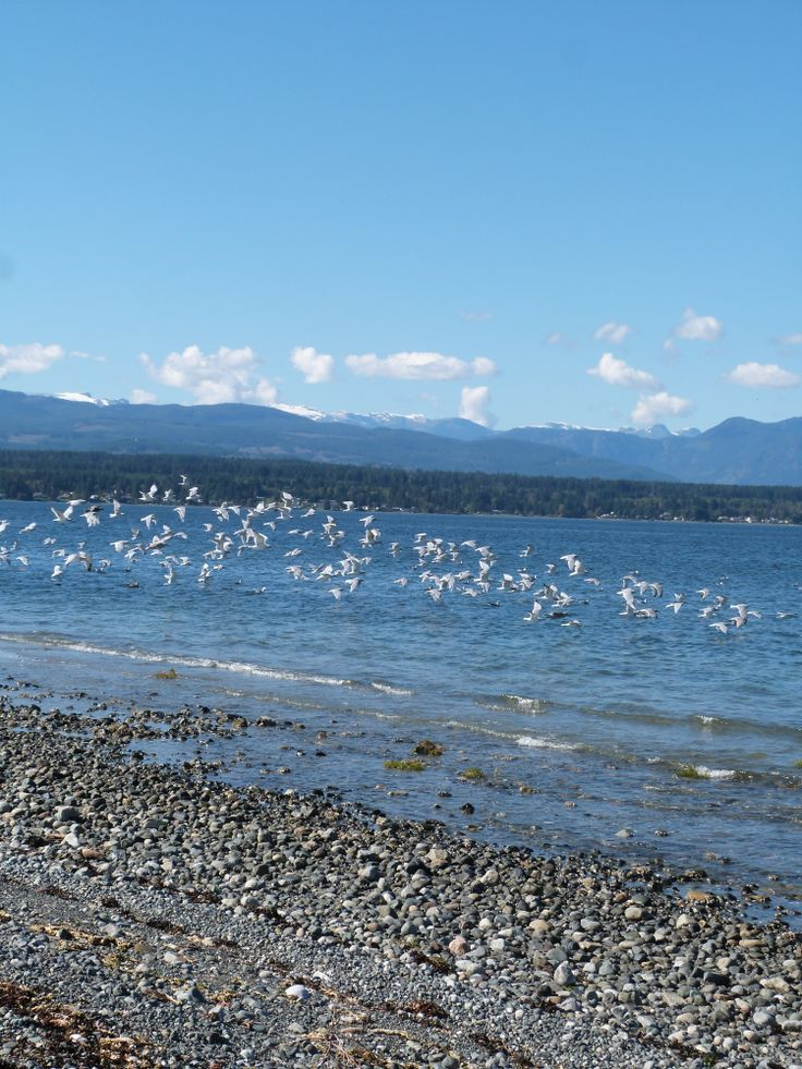 Northern Denman Island, Canada