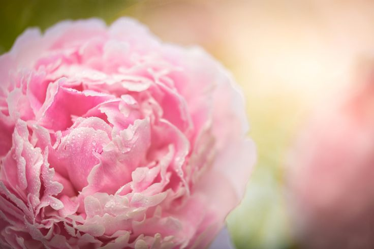 Blooming Beauty by Carl Alexander Hopland on 500px