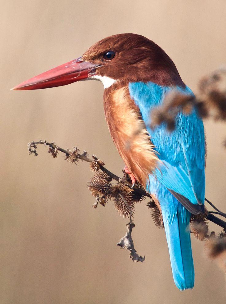 Kingfisher 1 - null