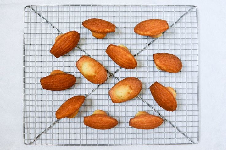 One bite in these unassuming madeleines and the hair in your nape will stand to attention, as you suddenly register …